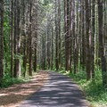 A peaceful stretch of the trail that leads through a stand of evergreen trees.- Banks-Vernonia Trail