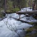 A short spur trail visits the rushing Fishook Creek.- Alpine Way Trail, Fishhook Creek to Iron Creek