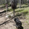 Leashes are required from July 1 through Labor Day in the Sawtooth Wilderness.- Alpine Way Trail, Fishhook Creek to Iron Creek