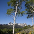 Arrowleaf balsamroot (Balsamorhiza sagittata) and aspen frame the view of the peaks above Fishook Creek.- Alpine Way Trail, Fishhook Creek to Iron Creek