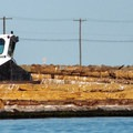 A small vessel navigates through floating logs.- Port Angeles Harbor Sea Kayaking
