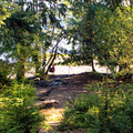 The primary campground on Tivoli Island.- Ozette Lake Sea Kayaking
