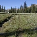 Open meadows at the Mattingly Divide.- Alturas Lake Creek to Mattingly Divide