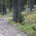 A steep section of rutted trail as the trail climbs toward the head of the canyon.- Alturas Lake Creek to Mattingly Divide