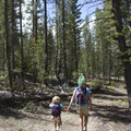 Early sections of the trail follow an old road that eventually narrows to a single-track.- Alturas Lake Trail