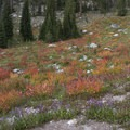 Shrub colors in September.- Little Queens River - Browns Lake