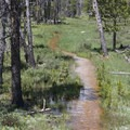 More wet and flooded trail.- Bull Moose Creek
