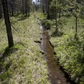A flooded trail as it enters the uppermost meadow around 7,100 feet.- Bull Moose Creek