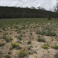 Spring wildflowers and snow-capped peaks.- Bull Moose Creek