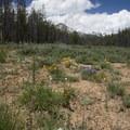 Wildfllowers and Mount Heyburn.- Bull Moose Creek