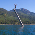 Jumping off a tree in the middle of Kachess Lake.- Kachess Lake Campground