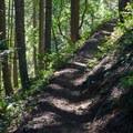 Up the ridge through a dense fir forest.- Kachess Beacon