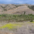 A variety of grasses provides color and texture.- Los Peñasquitos Canyon Preserve