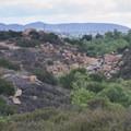 The canyon proper, through which Peñasquitos Creek runs.- Los Peñasquitos Canyon Preserve