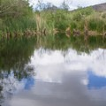 A quiet pond along the North Trail.- Los Peñasquitos Canyon Preserve