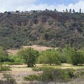 Along the North Trail.- Los Peñasquitos Canyon Preserve