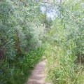 A cozy stroll through tall marsh grasses.- Los Peñasquitos Canyon Preserve