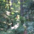 Spider on the Wauna Point Trail.- Wauna Point Hike
