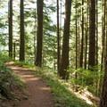 The trail to Wauna Point.- Wauna Point Hike