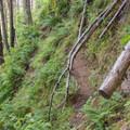 Start of the scramble.- Wauna Point Hike