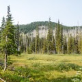 - Canyon Creek Meadows