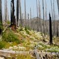 Trail to Wasco Lake.- Canyon Creek Meadows