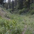 The south facing Joe Daley Trail can support more wildflowers than the shady China Basin side.- China Basin to Joe Daley Creek