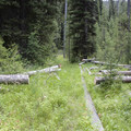 The China Basin Trail is not heavily used, so hikers often have to look for the cut logs cleared from the trail after a forest fire in 2000.- China Basin to Joe Daley Creek