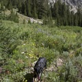 Wildflowers decorate the lush openings along the Leggit Lake Trail.- Middle Fork of the Boise River, Leggit Lake