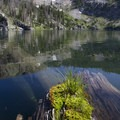 Moss on a log at Leggit Lake.- Middle Fork of the Boise River, Leggit Lake