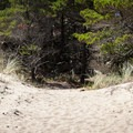 Portions of the trail are sandy.- New River ACEC Trails
