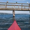 Gulls rest on a pier near Hedley Spit on Bainbridge Island.- Golden Gardens to Hedley Spit, Bainbridge Island