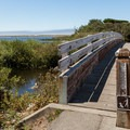 The Floras Lake Trail begins at the boat ramp.- Floras Lake Trail Hike