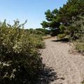 Floras Lake Trail.- Floras Lake Trail Hike