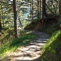 The trail down to the South Cove is steep but paved.- Cape Arago State Park