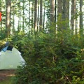 The island offers spacious campsites only a short walk from the beach.- Hope Island State Park Sea Kayaking