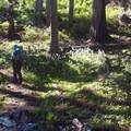 Elk Cove area.- Timberline Trail