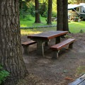 Typical campsite at Mineral Springs Campground.- Mineral Springs Campground