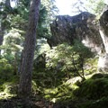 Lush green forest and boulders on the Heather Lake Trail.- Heather Lake Trail