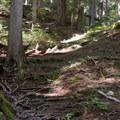 The trail can be tricky when wet due to tree roots exposed on path.- Heather Lake Trail