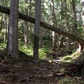 Many roots on trail. Watch your footing. - Heather Lake Trail