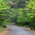 Drive in campground sites at Wish-Poosh Campground.- Wish-Poosh Campground