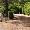 A pull-through site at Eel Creek Campground.- Eel Creek Campground