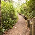 Initially the trail is on a firm base and surrounded by a healthy representation of Oregon Coastal flora.- John Dellenback Trail