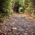 The trail tunnels through a band of incredibly thick forest.- John Dellenback Trail