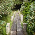 A boardwalk leads over marshy areas near the beach.- John Dellenback Trail