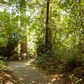 The paved spurs that leave from the lakeshore trail lead to the Umpqua Lighthouse State Park Campground.- Lake Marie