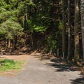 A typical site in Umpqua Lighthouse State Park Campground.- Umpqua Lighthouse State Park Campground