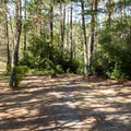 Shaded picnic areas in William M. Tugman State Park.- William M. Tugman State Park