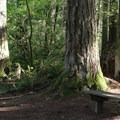Benches found along the hiking trails in Nolte State Park.- Nolte State Park, Deep Lake